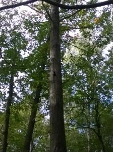 Forêt Hamadryade