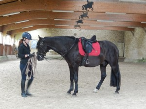 cheval dans manège