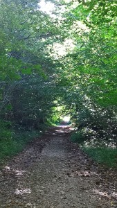En forêt de Port-Royal
